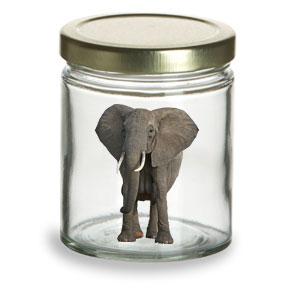 Elephant in a Jar